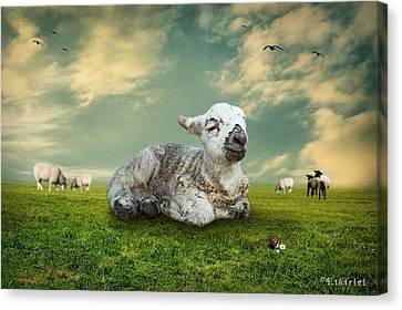 The Lamb Canvas Print