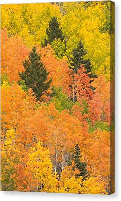 The Leaves Of A Forest Change Colors Canvas Print by Ralph Lee Hopkins