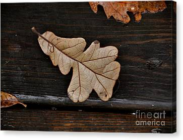 The Leaves Canvas Print by Tamera James
