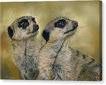 Meerkat Canvas Print - The Likely Lads by Bev Lewis