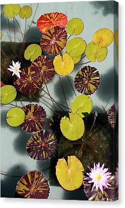 The Lily Pond Canvas Print by James Mancini Heath
