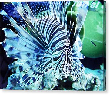 The Lionfish 1 Canvas Print by Robin Hewitt