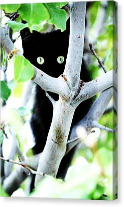 Canvas Print featuring the photograph The Little Huntress by Jessica Shelton
