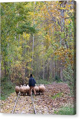 Canvas Print - The Little Shepherd by Issam Hajjar