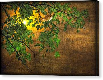 The Little Sparrow In The Tree Canvas Print by Tom York Images