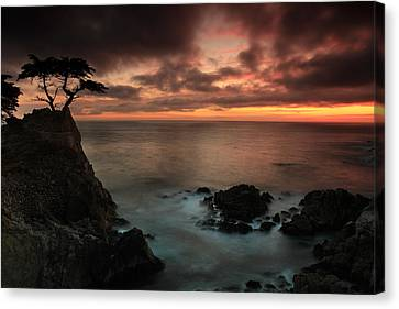 The Lone Cypress Observes A Pebble Beach Sunset Canvas Print by Dave Sribnik