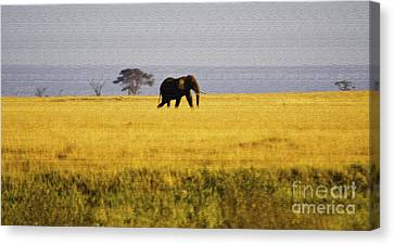 The Lone Elephant Canvas Print by Pravine Chester