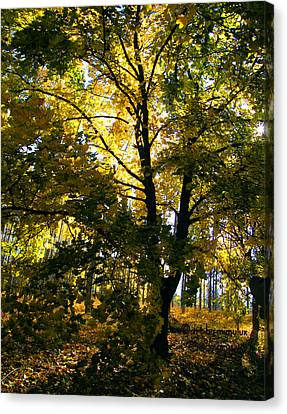 The Luminous Tree Canvas Print by Mimulux patricia no No