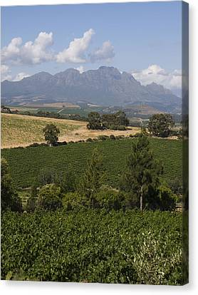 The Lush Garden Landscape Of A Vineyard Canvas Print