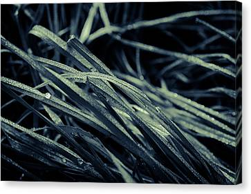 The Lying Grass Canvas Print by Andreas Levi