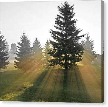 Canvas Print featuring the photograph The Magic Of The Morning Light by Nick Mares