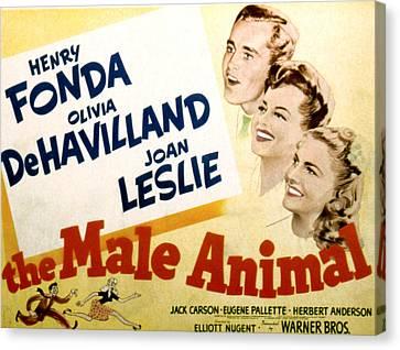 The Male Animal, Henry Fonda, Olivia De Canvas Print