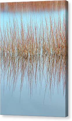 The Marsh Mirror Canvas Print by Loree Johnson