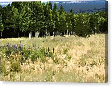 The Meadow Digital Art Canvas Print by Phyllis Denton