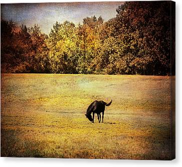 The Meadow Canvas Print by Jai Johnson
