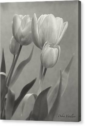 The Mirror Tulips Canvas Print by Debra     Vatalaro