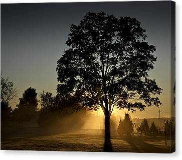 Canvas Print featuring the photograph The Morning Light by Nick Mares