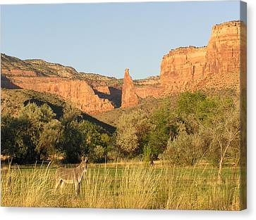 The Mule And Independence Rock Canvas Print