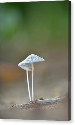 Canvas Print featuring the photograph The Mushrooms by JD Grimes