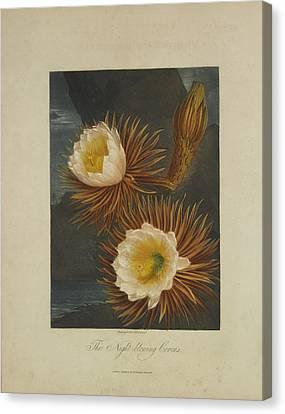 The Night-blooming Cereus Canvas Print by Robert John Thornton