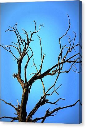 The Old Tree Canvas Print by Mara Barova
