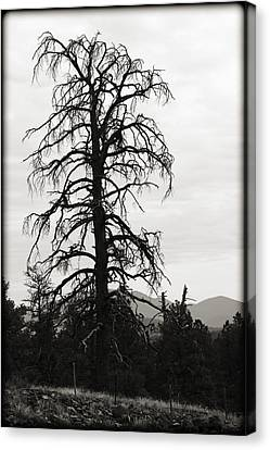 The Old Tree Canvas Print by Ricky Barnard