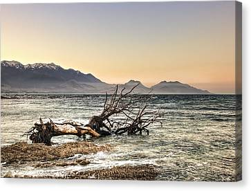 Aotearoa Canvas Print - The Old Tree Trunk by Andreas Hartmann