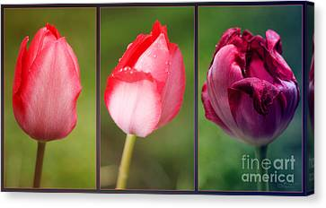The One And Only Canvas Print by Jutta Maria Pusl