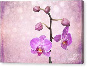 The Orchid Tree - Texture Canvas Print by Hannes Cmarits