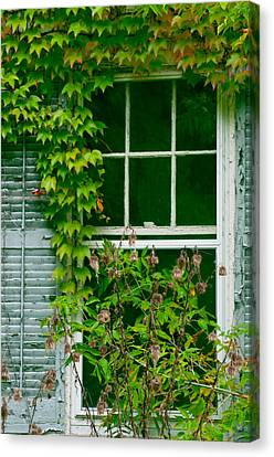 The Other Window Canvas Print by Lisa  DiFruscio