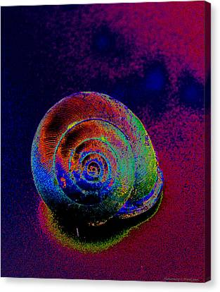 The Painted Shell Canvas Print