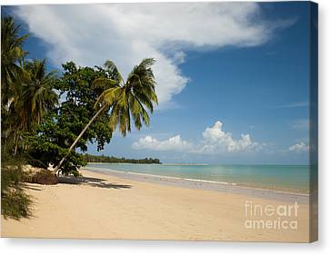 The Palms Of Khao Lak Canvas Print