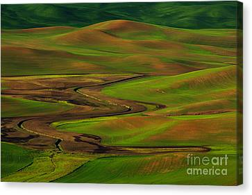 5dmk3 Canvas Print - The Palouse by Beve Brown-Clark Photography