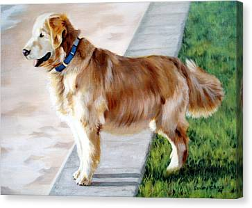 Canvas Print - The Patient Golden by Sandra Chase