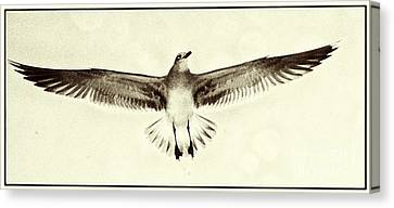 Canvas Print featuring the photograph The Perfect Wing by Jim Moore