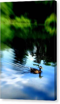 The Pond - Central Park Nyc Canvas Print by Maria Scarfone