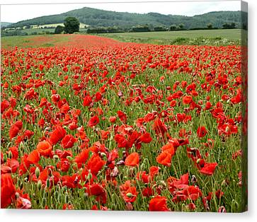 The Poppy Field Clonmel Canvas Print by Debra Collins