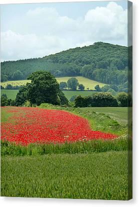 The Poppy Field. Canvas Print by Debra Collins