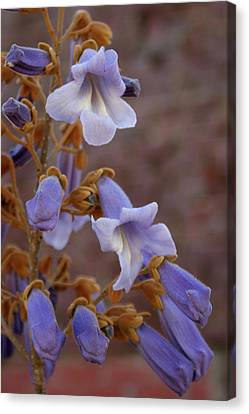 The Princess Flower Canvas Print by Paul Mashburn