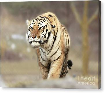 The Prowler Canvas Print by Inspired Nature Photography Fine Art Photography