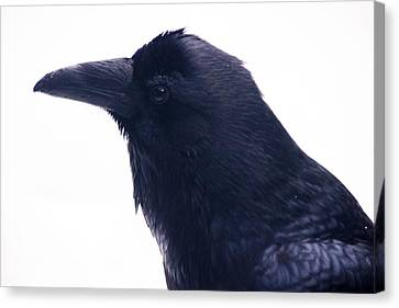 The Raven.  A Study In Black And White Canvas Print