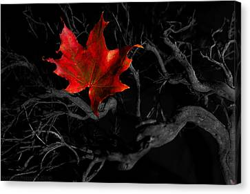 Canvas Print featuring the photograph The Red Leaf by Beverly Cash