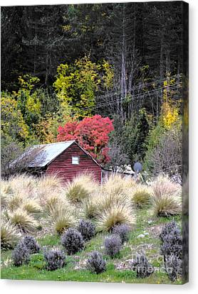 The Red Shed Canvas Print by Karen Lewis
