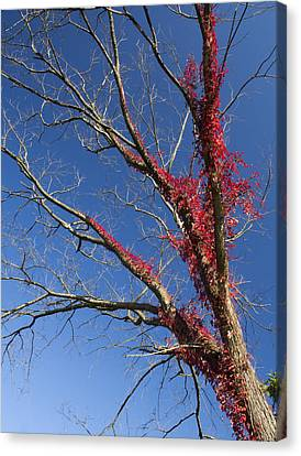 Canvas Print featuring the photograph The Red Tree by Nick Mares