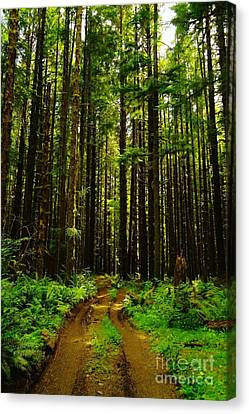 The Road Into The Green  Canvas Print by Jeff Swan