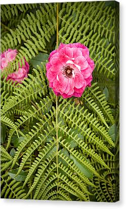 Canvas Print - The Rose And The Fern by Sheri Van Wert