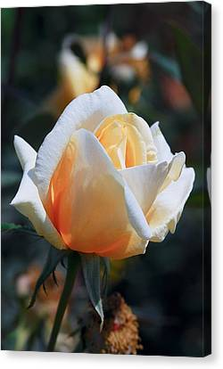 Canvas Print featuring the photograph The Rose by Fotosas Photography