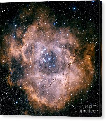 Monoceros Canvas Print - The Rosette Nebula by Charles Shahar