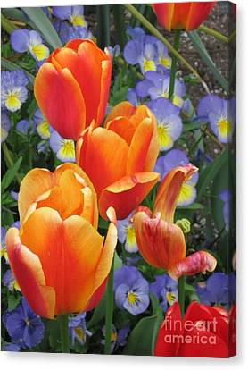 The Secret Life Of Tulips - 2 Canvas Print by Rory Sagner
