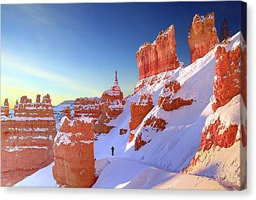 The Sentinal Bryce Canyon Canvas Print by (C) Rob Little